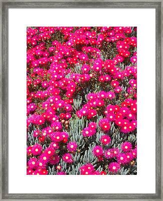 Dazzling Pink Flowers Framed Print