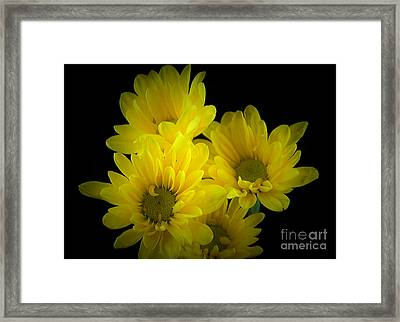 Dazzling Yellow Framed Print by Ray Shrewsberry