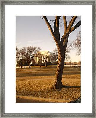 Dc Tree Framed Print by Anne