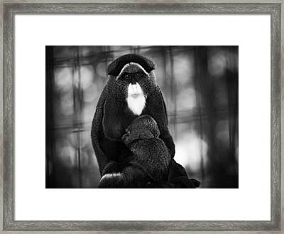 De Brazza's Monkey Framed Print