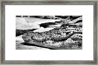 De-nile Framed Print by JC Findley