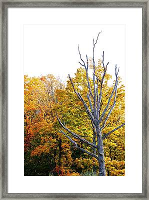 Dead And Dying Framed Print by Peter  McIntosh