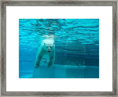 Dead Bear Float Framed Print by Brianna Thompson