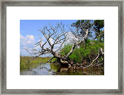 Framed Print featuring the photograph Dead Cedar Tree In Waccasassa Preserve by Barbara Bowen