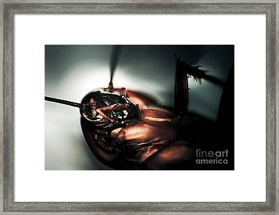 Dead Cockroach Framed Print by Jorgo Photography - Wall Art Gallery