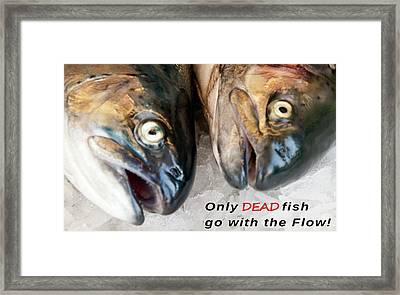 Dead Fish .... Go With The Flow Framed Print by Daniel Hagerman
