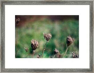 Dead Flower Framed Print by Simonne Mina