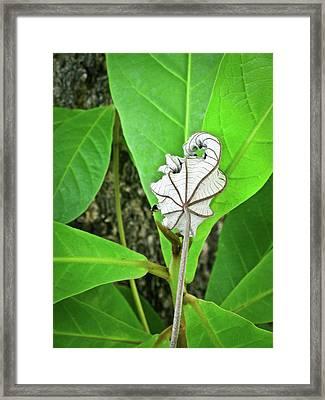 Dead Leaf Live Leaf Framed Print by Douglas Barnett