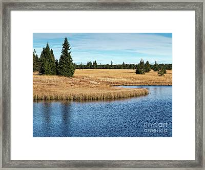 Dead Pond In Ore Mountains Framed Print by Michal Boubin