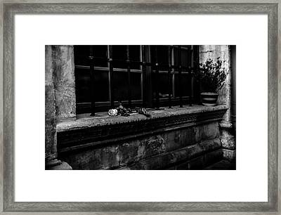 Dead Rose Framed Print