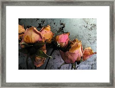 Dead Roses 2 Framed Print