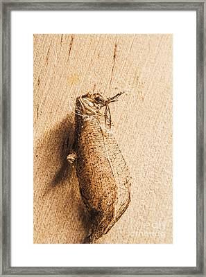 Dead Still Framed Print by Jorgo Photography - Wall Art Gallery