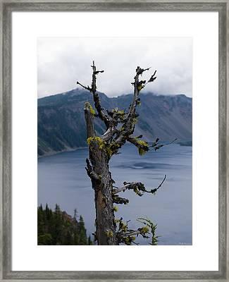 Dead Tree Framed Print by Alexander Fedin