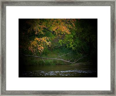 Dead Tree And Leaves Framed Print by Michael L Kimble