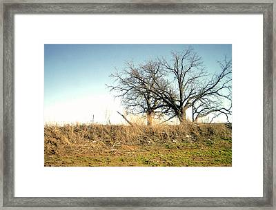 Dead Tree Framed Print by Chad Taber