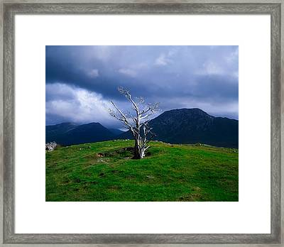 Dead Tree, Connemara, Co Galway, Ireland Framed Print by The Irish Image Collection