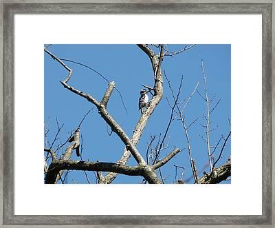 Dead Tree - Wildlife Framed Print by Donald C Morgan