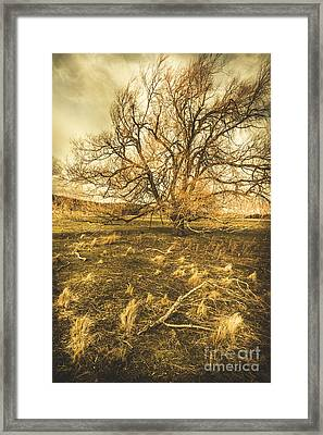 Dead Tree In Seasons Bare Framed Print