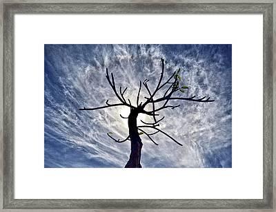 Dead Tree In St. Johns Antigua Framed Print