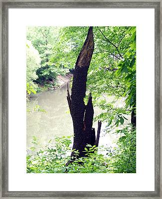 Framed Print featuring the photograph Dead Tree by Lola Connelly