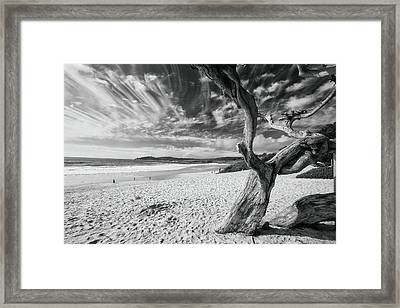 Dead Tree On The Beach Framed Print by George Oze