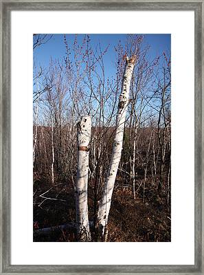 Dead Tree Framed Print by Richard Mitchell