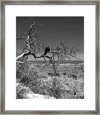 Dead Tree With Crow Framed Print by Michael Perlin