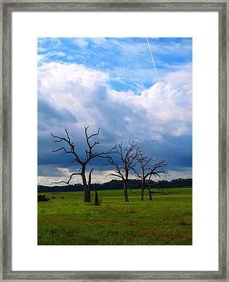 Dead Trees Framed Print