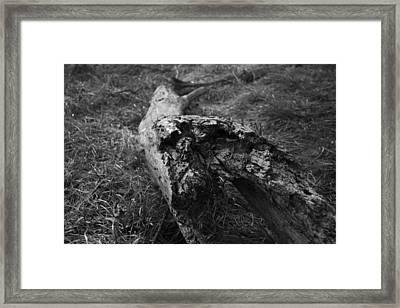 Dead Wood Framed Print by Bradley Nichol