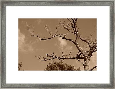 Framed Print featuring the photograph Dead Wood by Rob Hans