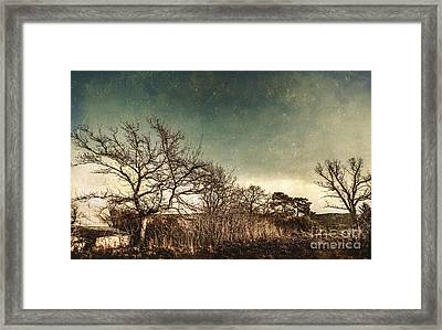 Dead Woodland Framed Print by Jorgo Photography - Wall Art Gallery