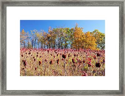 Deadly Beauty In The Blue Ridge Framed Print by Dan Carmichael