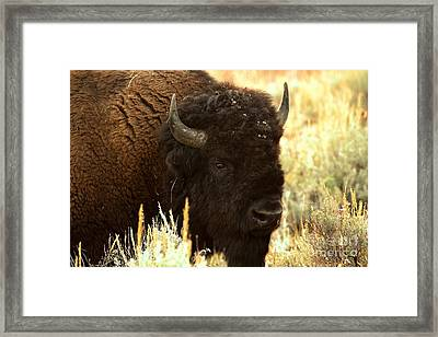 Deadly Serious Framed Print by Adam Jewell