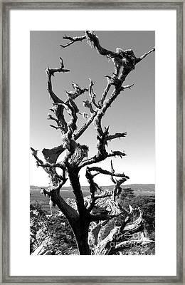 Deadwood Framed Print by Rick Maxwell