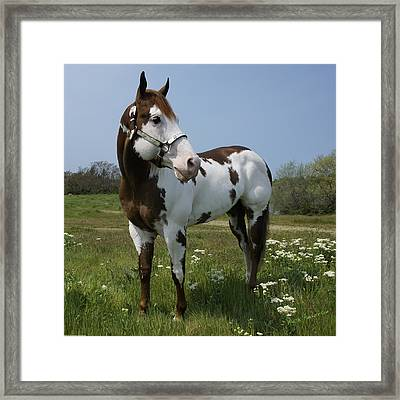 Dealer Posing Proud Framed Print by Mick Anderson