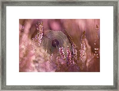 Dear Heather - Heath In Bloom Framed Print by Roeselien Raimond
