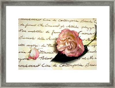 Dear Rose Framed Print by Kathy Bucari