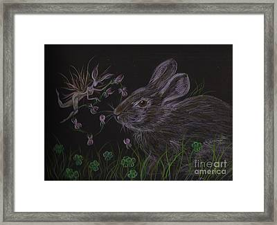 Framed Print featuring the drawing Dearest Bunny Eat The Clover And Let The Garden Be by Dawn Fairies