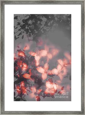 Death Blooms Framed Print by Jorgo Photography - Wall Art Gallery