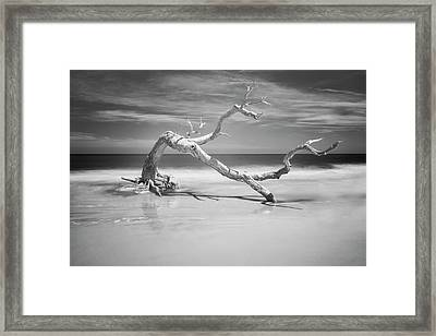 Death Of A Tree Framed Print by Jon Glaser