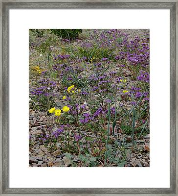 Death Valley Blooms Framed Print by Stephanie Grant