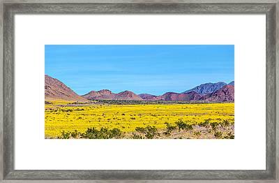 Death Valley Super Bloom 2016 Framed Print