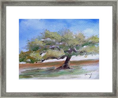 Framed Print featuring the painting Deborah's Tree by Sally Simon