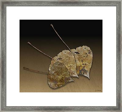 Framed Print featuring the photograph Decaying Leaves by Joe Bonita