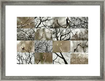 December Buds Framed Print
