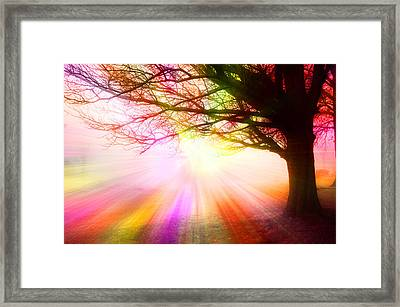 December Fog By The Sleepy Pin Oak Rainbow Burst Framed Print by Thomas Woolworth