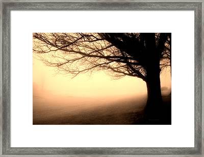 December Fog By The Sleepy Pin Oak Sepia Framed Print by Thomas Woolworth