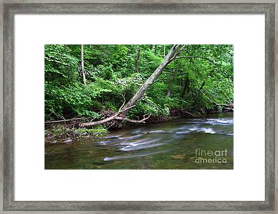 Deciduous Forest Along The Patapsco River Maryland Framed Print