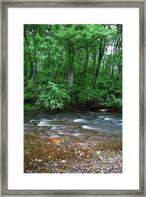 Deciduous Woodland And The Patapsco River Maryland Framed Print