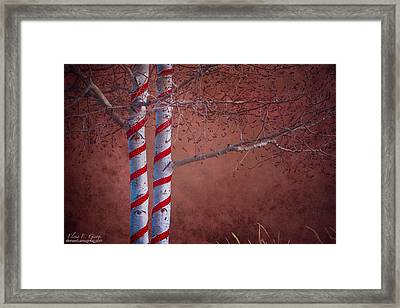 Decorated Aspens Framed Print